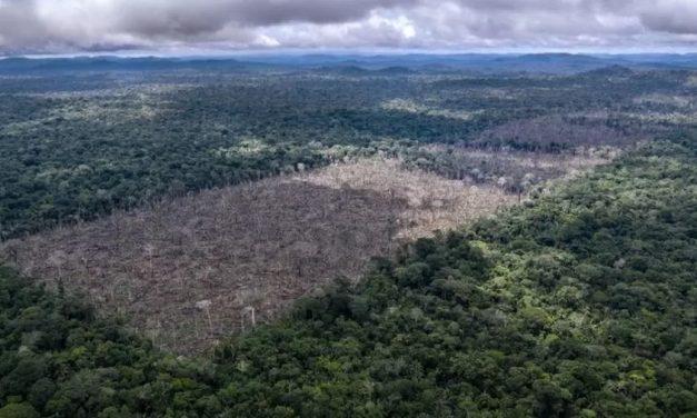 Bolsonaro obstrui multas vitais para proteção da Amazônia, dizem agentes