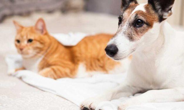 Ananindeua faz ação de castração de cães e gatos a partir desta segunda, 5