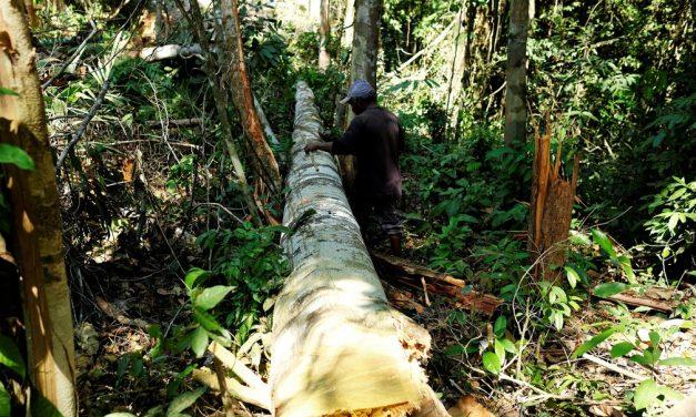 Área sob alerta de desmatamento na Amazônia Legal em junho foi a maior da série histórica, aponta Inpe