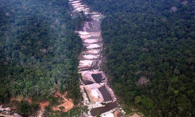 Mais de 10 mil espécies correm risco de extinção na Amazônia, diz relatório