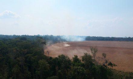 Desmatamento na Amazônia é o maior dos últimos 10 anos, diz Imazon