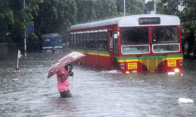 Cobras viram um problema na cidade de Mumbai, na Índia, com o aumento de chuvas e crescimento urbano