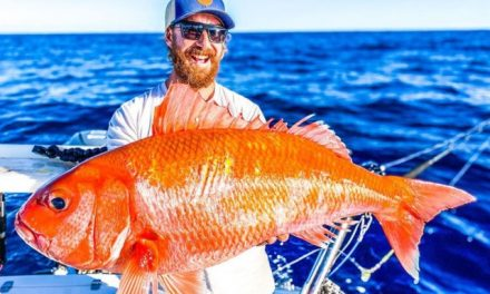 Homem pesca 'peixe-dourado' gigante na Austrália
