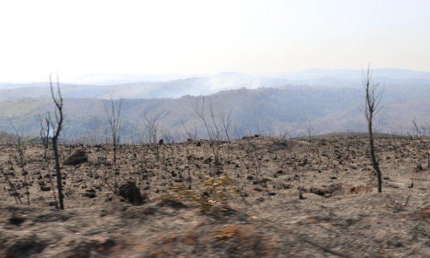 Fogo consumiu cerca de 80% do Parque do Juquery, diz Prefeitura de Franco da Rocha