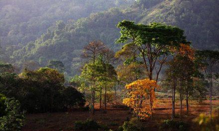 Governo do Pará se une aos esforços de proteção do ecossistema amazônico