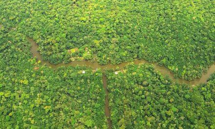 Estado do Pará apresenta redução de 39% de desmatamento em áreas estaduais