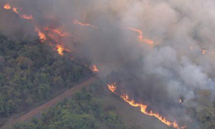Cerrado registra maior número de focos de incêndio desde 2012