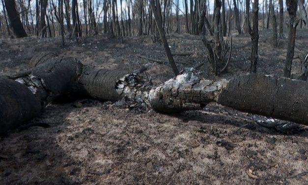 Dia Nacional do Cerrado: bioma já perdeu 50% da vegetação original e pesquisadoras alertam para aumento do desmate e do fogo