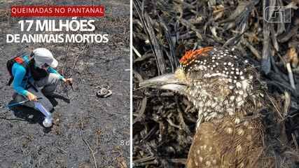 Queimadas mataram 17 milhões de animais vertebrados no Pantanal em 2020, aponta estudo