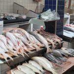 Venda de peixe em Barcarena cai 90% por medo da doença da urina preta