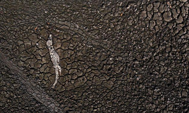 Pantanal, 1 ano depois: fotógrafo retrata resiliência após queimada histórica e impacto da seca
