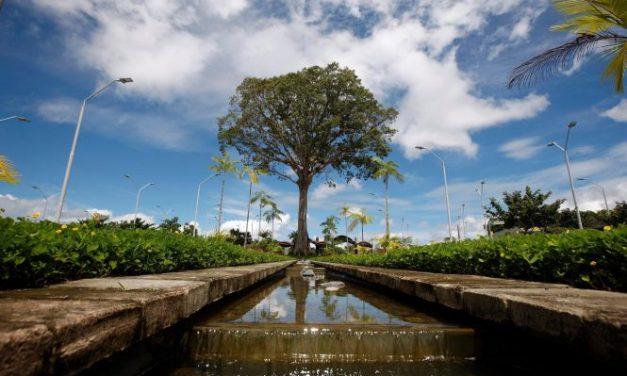 Governo do Pará investe em projetos de plantio e estudo de árvores amazônicas