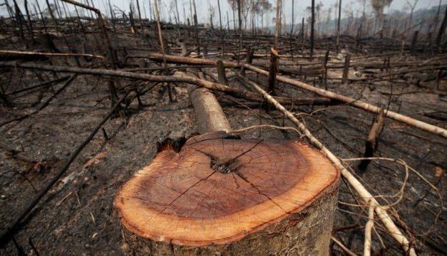 Alertas de desmate na Amazônia têm segundo pior setembro na série histórica, aponta Inpe