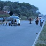 Perigo na estrada Bragança/Ajuruteua